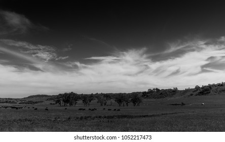 New South Wales landscape, black and white