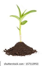 new sprout and dirt isolated on white