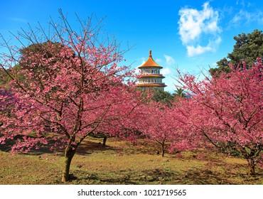 New Taipei City,Taiwan - Jan 27th,2018 : Origin of the temple ,Tianyuan Temple , is located in Shui-Yuan Li, Tamsui Town, New Taipei City,Taiwan.