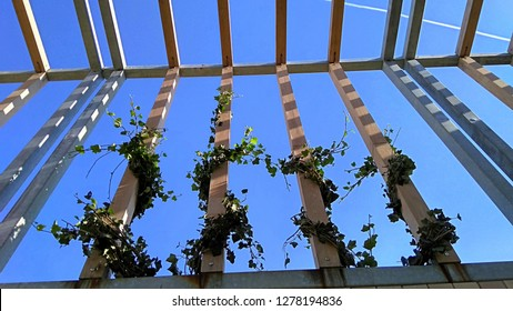 A new tall pergola made of parallel, wooden, light brown laths & metal, painted grey pipes. Vines elegantly twine around trellis vertical laths on the blue sky background.