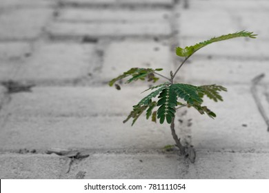 A new tree shoots out from in between concrete bricks on the floor. A display of hardiness and resilience.