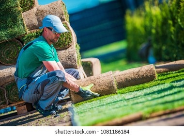 New Turf Grass Installation by Professional Gardener. Rolls of Grass on the Backyard.