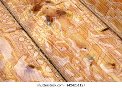 New varnished floor planks beaded with water drops