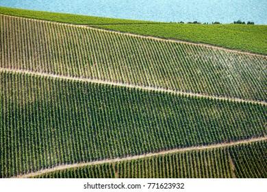 New vineyards of Plavac mali grape in southern Dalmatia near Peljesac peninsula in Croatia