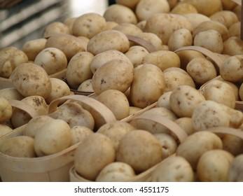 new white fresh potatoes