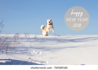 New Year 2018 congratulatory message with a funny dog of Japanese akita inu breed is jumping in a snowdrift in winter on a blue sky background with dried grass in the snow.