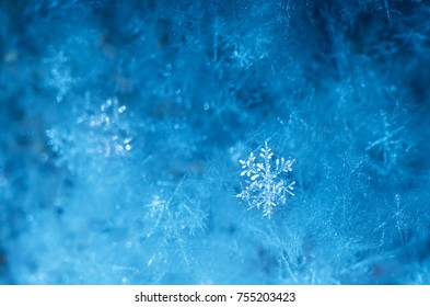 New Year and Christmas abstract icy snowy background with real snowflakes macro in cold blue tones. Cold winter background