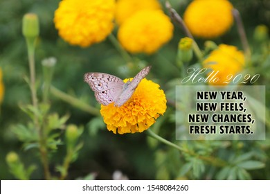 New year inspirational motivational quote - New year, new feels, new chances, fresh starts. With butterfly on marigold flower background. Hello 2020 concept with nature.