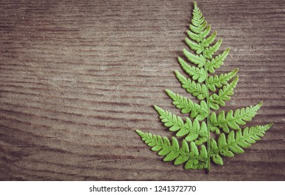 Christmas Tree Fern Leaf On Old Stock Photo Edit Now 530361256
