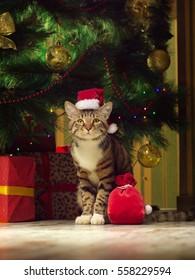 New Year's cat