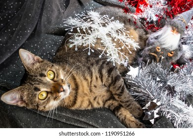 New Year's and Christmas with a cat and a Santa doll on the background of decor and ornaments.