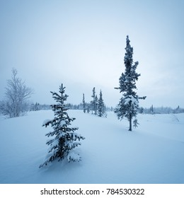 New Years fir tree in the snow winter forest  in blue tones