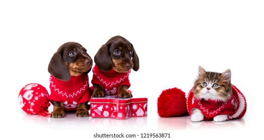 New Year's Puppy dachshund and Christmas kitten