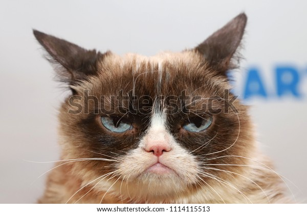 NEW YORK - APRIL 4, 2018: Grumpy Cat attends an event in celebration of her 6th Birthday on April 4, 2018, in New York City.