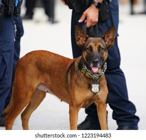 NEW YORK - AUGUST 27, 2018: NYPD K-9 dog provides security at National Tennis Center during 2018 US Open