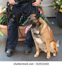 NEW YORK - AUGUST 29, 2015: NYPD transit bureau K-9 police officer and Belgian Shepherd K-9 Wyatt providing security at National Tennis Center during US Open 2015 in New York