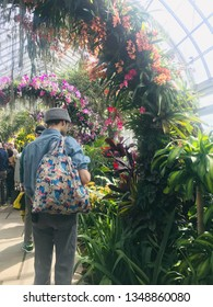 """The New York Botanical Garden-Bronx-NYC-USA. Sunday-March 24.2019. The Orchid Show: Singapore - tribute to the """"City in a Garden"""" thousand of orchids climbing to the sky"""