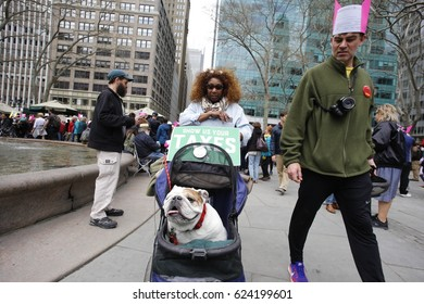 NEW YORK CITY - APRIL 15 2017: Thousands rallied at Bryant Park before marching to Trump Tower demanding the President release his taxes. English Bulldog in stroller