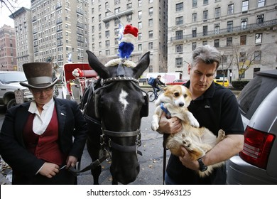 NEW YORK CITY - DECEMBER 13 2015: Cindy Adams & commissioner William Bratton hosted the seventh annual Blessing of the Animals at Christ Church in Manhattan. Driver Christina Hansen with horse Delilah