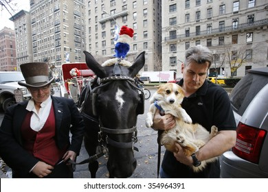 NEW YORK CITY - DECEMBER 13 2015: Cindy Adams joined commissioner Bratton to host the annual Blessing of the Animals at Christ Church in Manhattan. Carriage horse Delilah with driver Christina Hansen