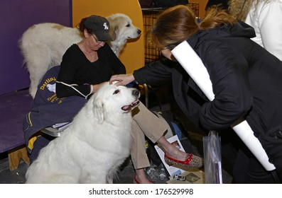 NEW YORK CITY - FEBRUARY 11 2014: The Westminster Kennel Club's 138th annual competition at Madison Square Garden is the dog world's most prestigious contest. Brace of Great Pyrenees with family