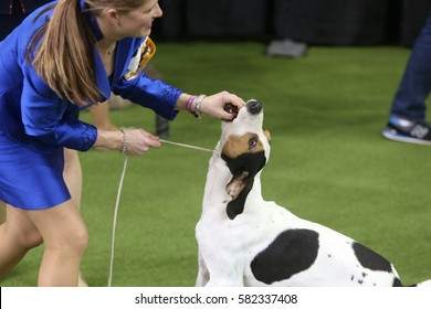 NEW YORK CITY - FEBRUARY 13 2017: The Westminster Kennel Club's 141st annual Best in Show took place in Madison Square Garden & the Hudson River's Pier 92.