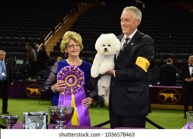 NEW YORK CITY - February 14 2018: The 142nd Westminster Kennel Club Show concluded with selection of Best in Show. Winner, Bichon Frise, Flynn with handler Bill McFadden and judge, Betty-Anne Stenmark