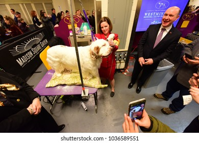 NEW YORK CITY - February 14 2018: The 142nd Westminster Kennel Club Dog Show concluded with selection of Best in Show