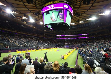 NEW YORK CITY - FEBRUARY 14 2017: The 141st Westminster Kennel Club Best in Show concluded in Madison Square Garden