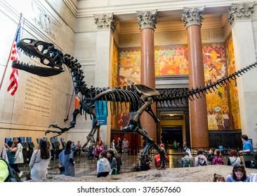 New York City, NY USA - May 1, 2015:New York City Museum of Natural Sciences Dinosaur Fossils