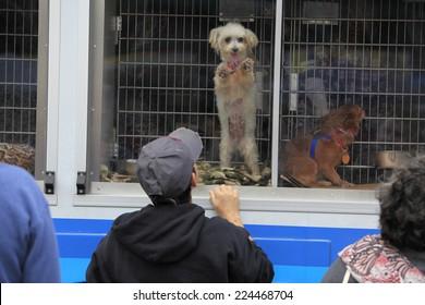 Pet Adoption Images, Stock Photos & Vectors | Shutterstock