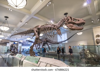 New York City, United States - May 15, 2017: Dinosaur fossil model in American Museum of Natural History.