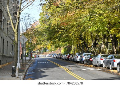 New York City, USA - Nov 16, 2017: View of a tree lined street in the borough of Kew Gardens in Queens on a sunny autumn day. The warm weather has resulted in a spectacular display of fall colours.