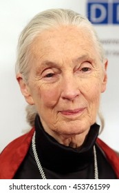 New York City, New York, USA; September 22, 2014;  Jane Goodall arrives to the United Nation's Equator Prize in New York City.