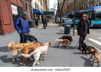 New York City, New York / USA United States - 04 08 2019: Dog walkers watching dogs in Upper West Side, Manhattan, NYC.