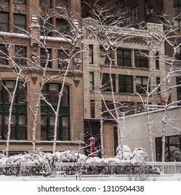 A New York City Winter scene with white birch trees against classic city architecture.