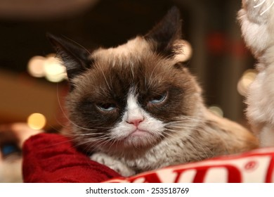 NEW YORK - FEB 15, 2015: Grumpy Cat  attends the 2015 Toyfair at the Jacob Javitz Center on February 15, 2015 in New York.