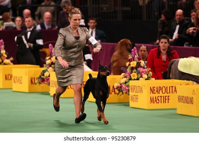 NEW YORK - FEBRUARY 14: Doberman Pinscher Grand Champion Protocal's Veni Vidi Vici (R) wins the Working Group in the Westminster Kennel Club Dog Show on February 14, 2012 in New York City.