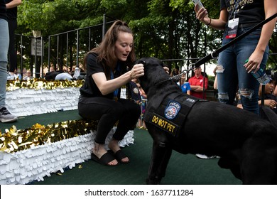 NEW YORK - JULY 10, 2019: Rose Lavelle appears petting a NYPD service dog during the United States Women's Soccer team ticker tape parade along the Canyon of Heroes on July 10, 2019, in New York.