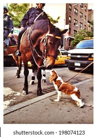 NEW YORK - MAY 30: New York Police Department (NYPD) horse kisses a cute puppy on a street corner melting the hearts of hundreds of onlookers on May 30, 2014 in New York City. Instagram filter used.