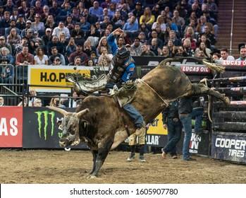 New York, NY - January 4, 2020: Dakota Buttar rides bull during second round of Professional Bull Riders season 2020 on arena at Madison Square Garden