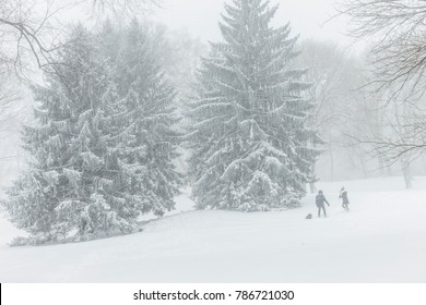 New York, NY - January 4, 2018: Adults and kids enjoy snow weather in Central Park under heavy snow storm, cold and wind. A giant winter bomb cyclone hit the US East Coast on Thursday