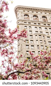 New York, NY / USA - 04-17-2018: View of the Flatiron Building in New York City during Spring surrounded by pink magnolias.