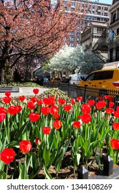 NEW YORK, NY, USA - APRIL 22, 2015: Park Avenue view with tulips  in NYC  at spring time.