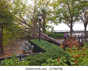 NEW YORK - OCT 30: A fallen tree blocks the Battery Park City promenade October 30, 2012 in Lower Manhattan, New York City, NY. Superstorm Sandy shut down much of the city.