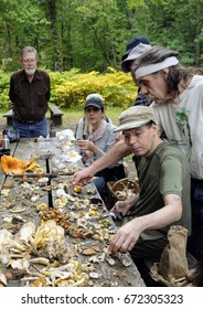 NEW YORK, Oct. 8, 2016 -- Members of the New York Mycological Society identify edible and poisonous mushrooms on a picnic table in South Mountain Reservation, New Jersey.