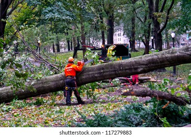 NEW YORK - OCTOBER 30:  Workers struggle to remove downed trees in Central Park one day after Hurricane Sandy October 30, 2012 in New York City.