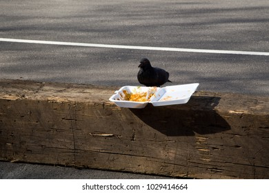 New York Pigeon Eating Fast-Food Leftovers on the Street
