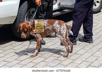 New York Police K-9 dog providing security in Manhattan