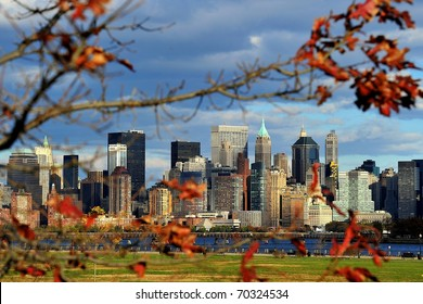New York through tree